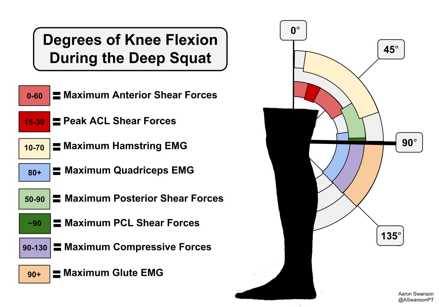 forces-with-the-deep-squat-swanson